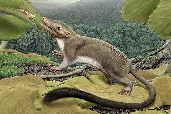 Самые большие крысы