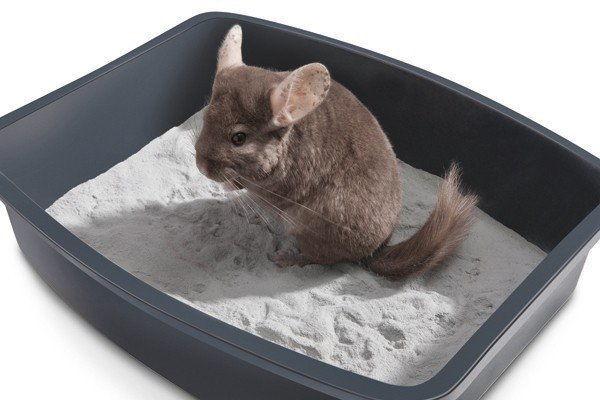 Ванночка с песком для шиншиллы