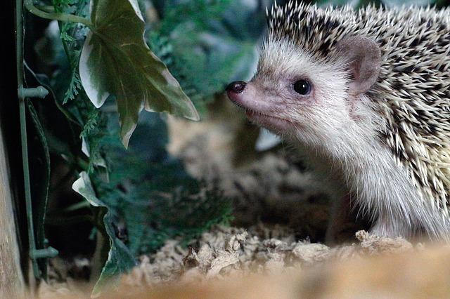 Hedgehog Rodent Plant Terrarium - lenayouknow / Pixabay